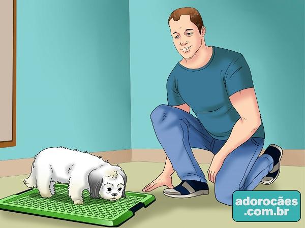 1-mostrar local do xixi para cão