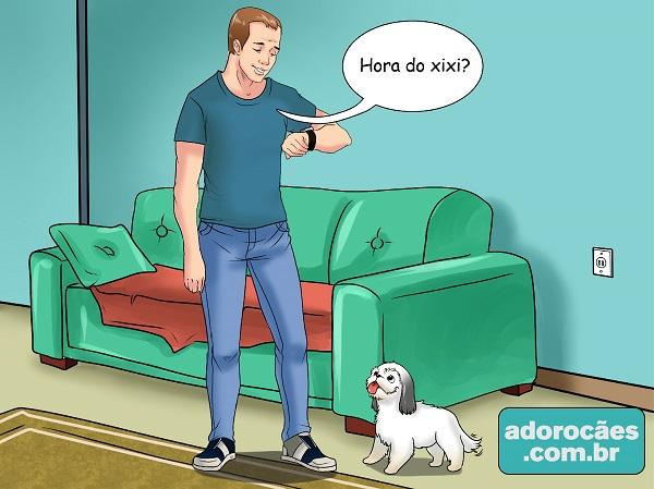 4 - rotina necessidades do cão