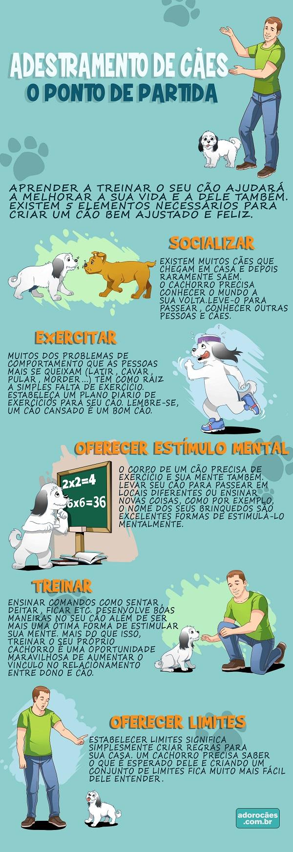 Adestramento de Cães infográfico