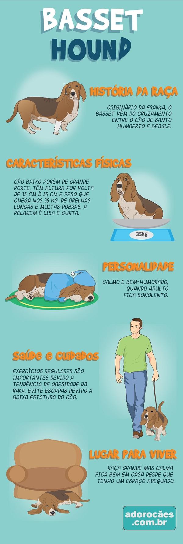 Basset Hound infografico