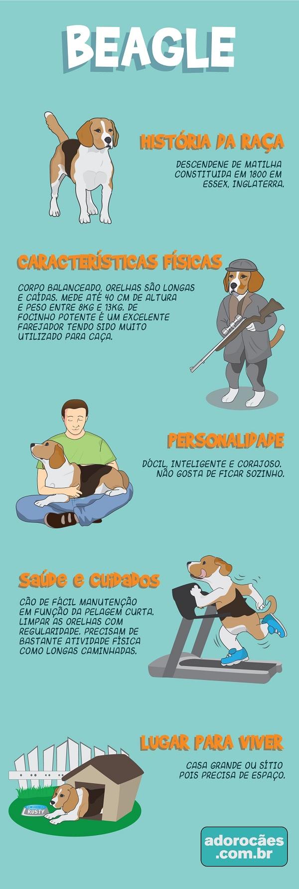 Beagle Infografico