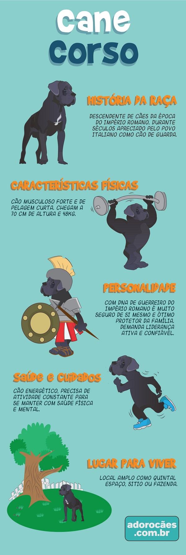 Cane Corso Infografico