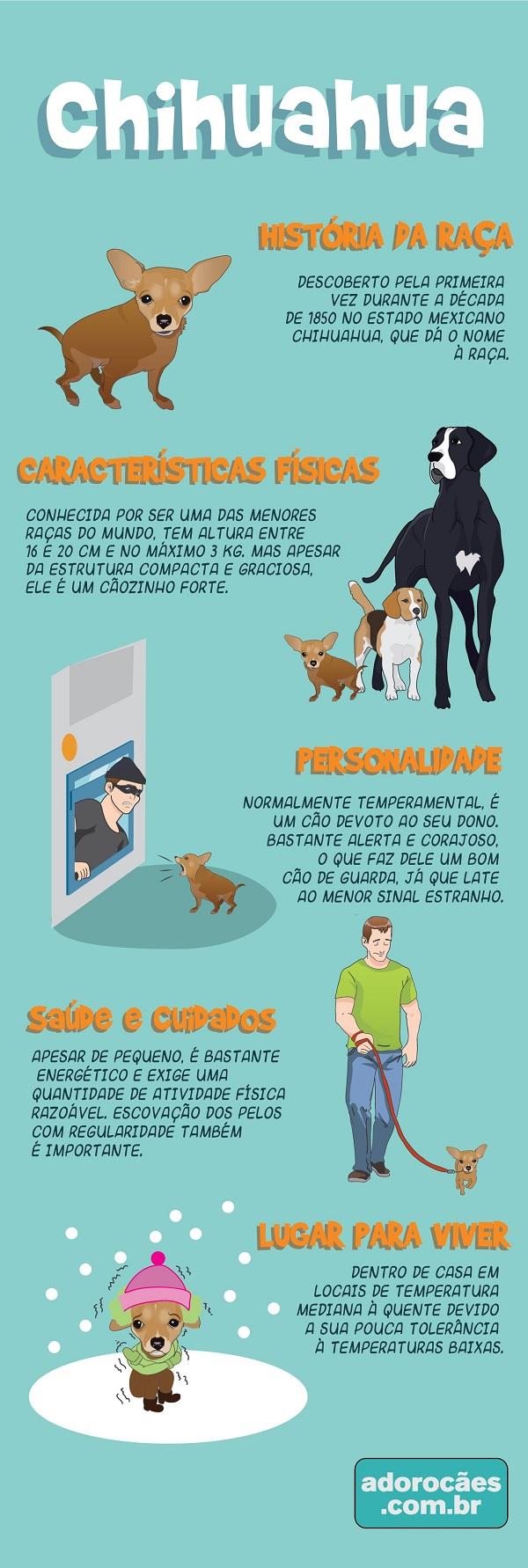 Chihuahua infografico