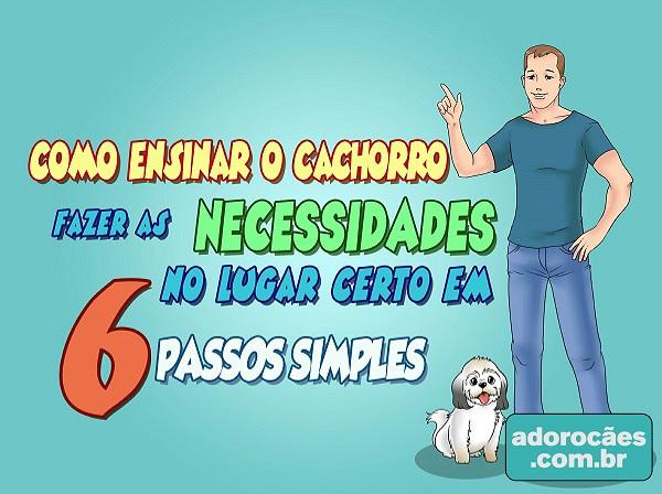 Como ensinar o cachorro fazer as necessidades no lugar certo