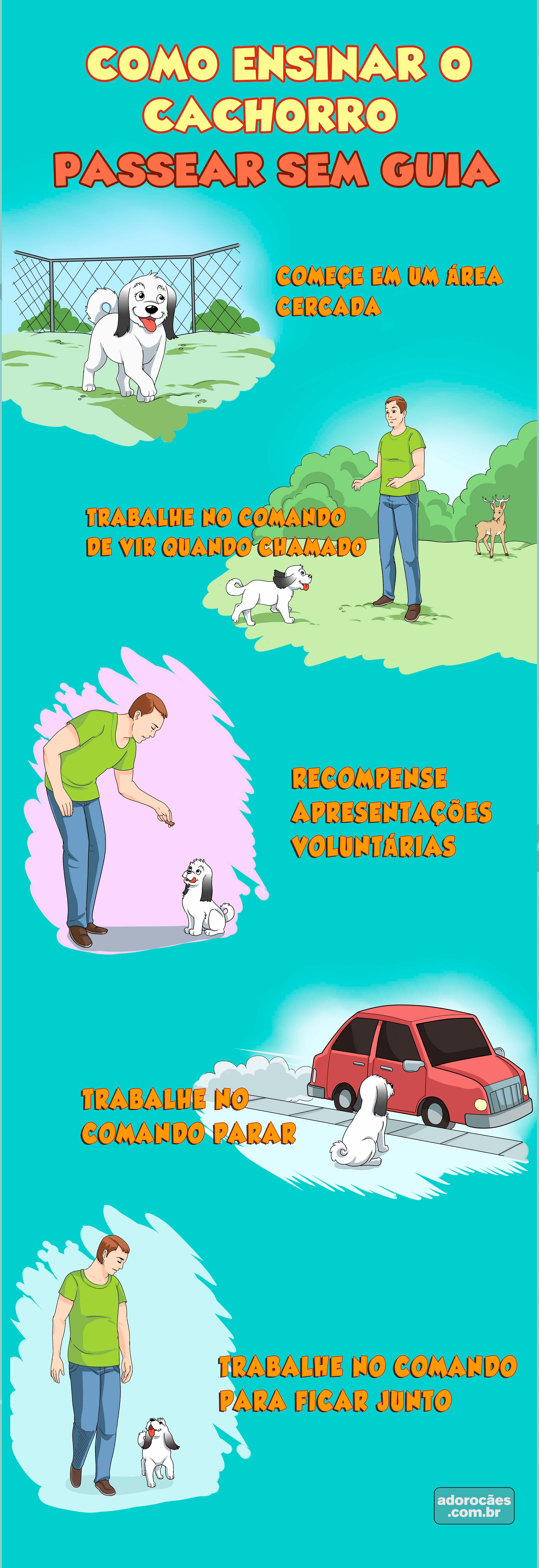 Como-ensinar-o-cachorro-passear-sem-guia-infografico