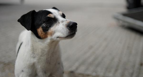 Dicas para doação de cães filhotes