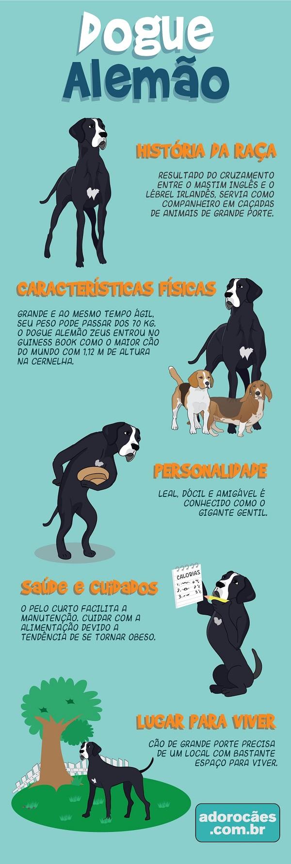 Dogue alemão infografico