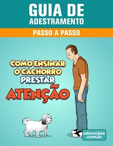 Guia de Adestramento - Como Ensinar o Cachorro Prestar Atenção