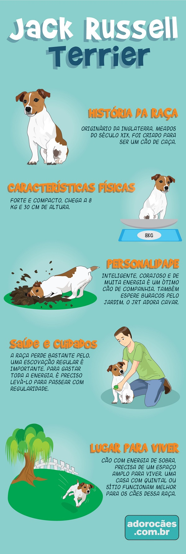 Jack Russell Terrier Infografico