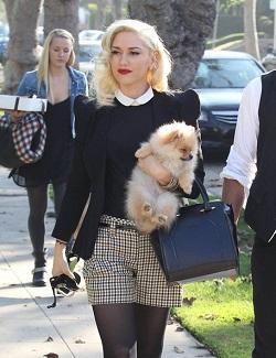 Lulu da Pomerânia - Gwen Stefani