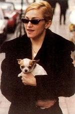 Madonna Chihuahua