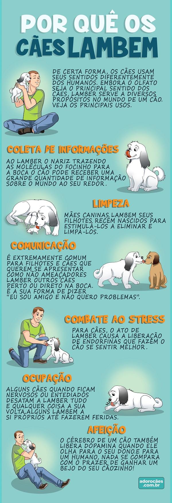 Por-quê-os-cães-lambem-infografico