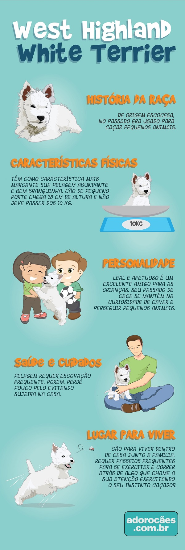 West Highland White Terrier Infografico