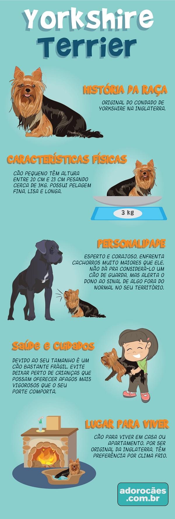 Yorkshire Terrier Infografico