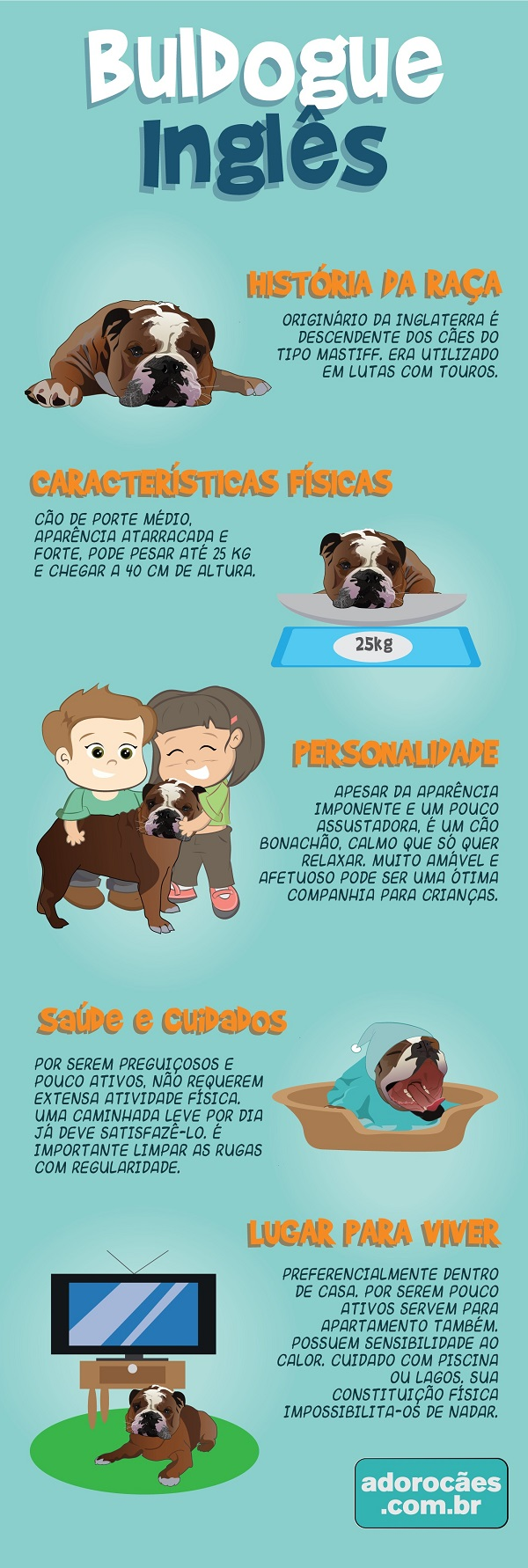 buldogue ingles infografico