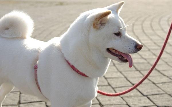 nomes para cachorro branco
