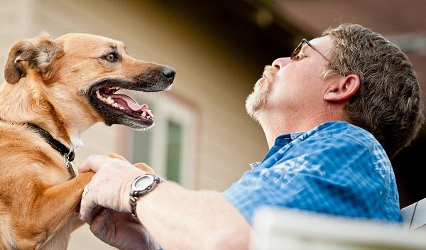 cachorro feliz com dono