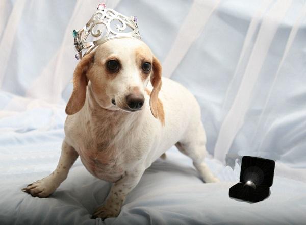 Nomes para cachorros de rico - AdoroCães.com.br - Para ...
