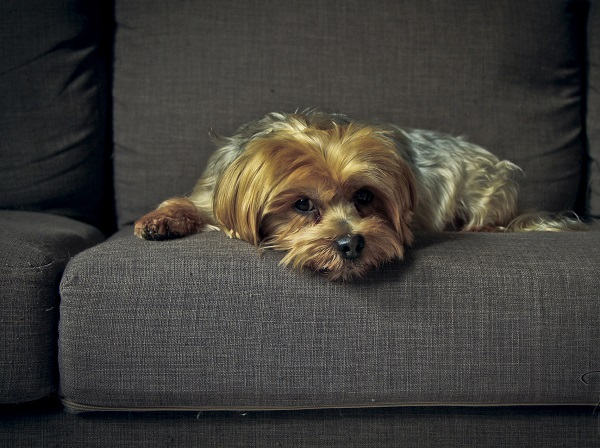 cachorro ficar sozinho o dia todo