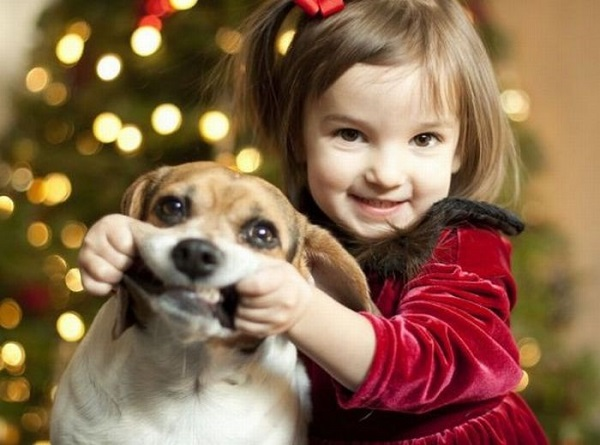 Frases Para Foto Com Cachorro Adorocãescombr Para Apaixonados