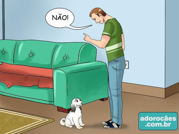 como fazer o cachorro parar de morder - passo 1