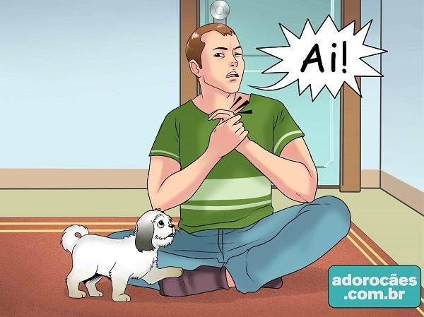 como fazer o cachorro parar de morder - passo 4