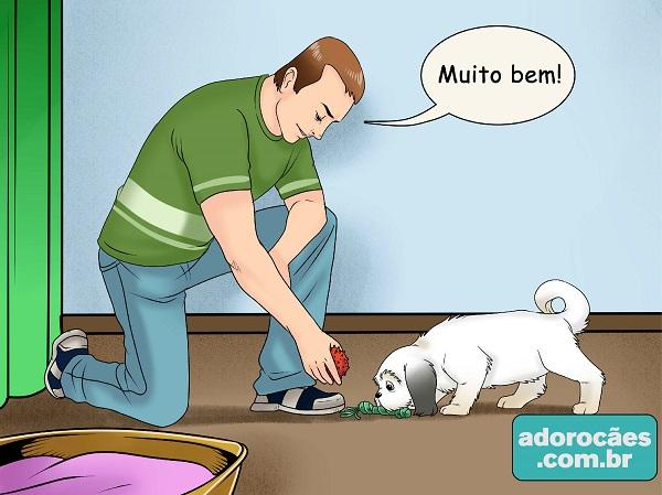 como fazer o cachorro parar de morder - passo 5