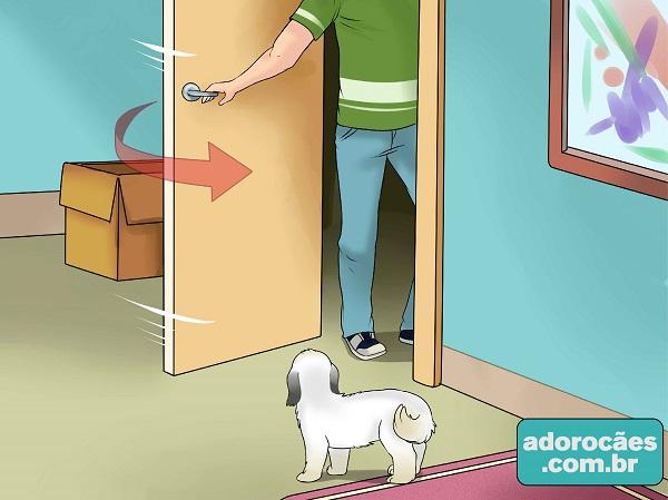 como fazer o cachorro parar de morder - passo 6