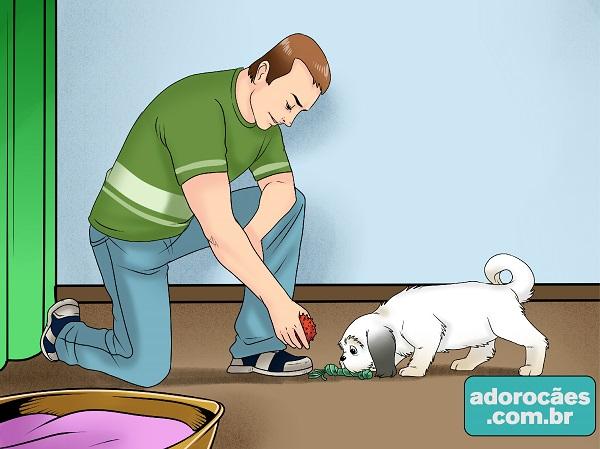 como fazer o cachorro parar de morder - passo7