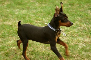 cachorros pequenos e fofos raça