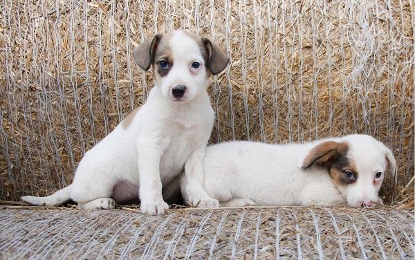 Onde encontrar filhotes de cães para adoção