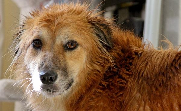Cadela prenha pode tomar banho
