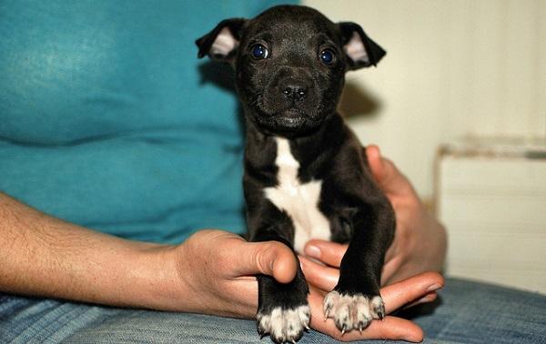 Quais as vacinas para cachorro filhote