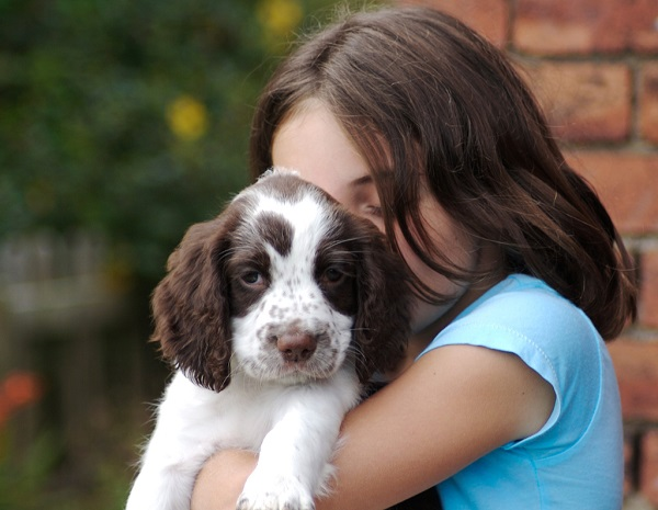 O que precisa para ter um cachorro